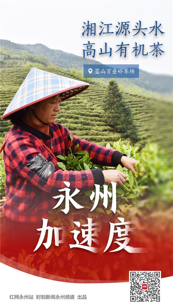 E湘江源头水,高山有机茶.jpg