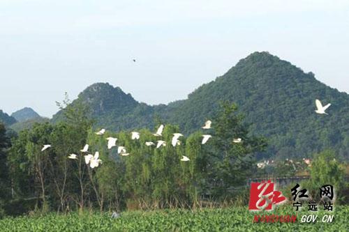 宁远:生态美白鹭飞1  1000 拷贝.jpg