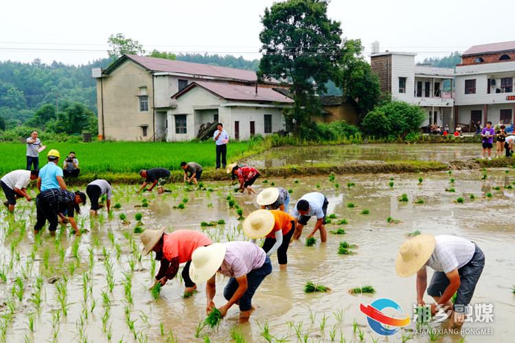 月山镇白龙村:趣味插秧比赛展农耕魅力