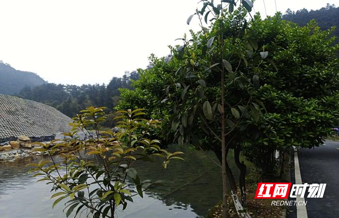 山清水秀的古山村.jpg