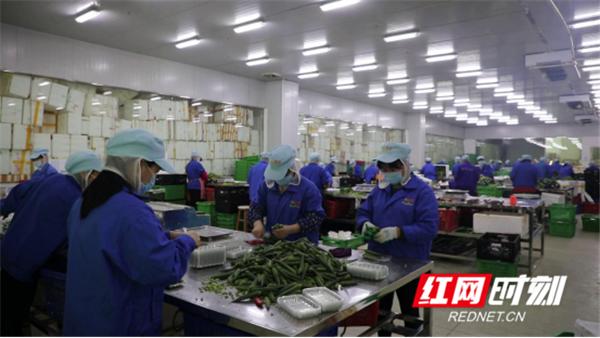 """新田东升村:发展富硒蔬菜产业 架起村民""""致富桥""""796_副本.png"""