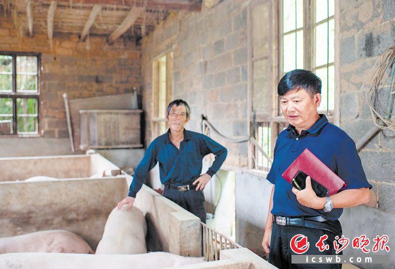 周若愚(右)来到了建档立卡贫困户罗金树的家里与他交流今年养猪的情况。  长沙晚报全媒体记者 邹麟 摄