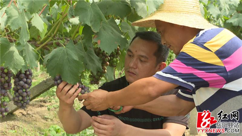 杨锌与驻村工作队一起入户走访葡萄种植情况000001_副本.jpg