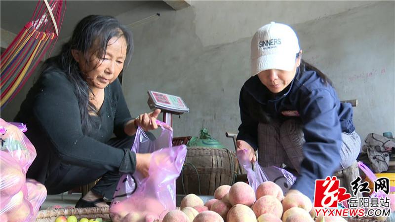 龚银香正在将桃子装袋_副本.jpg