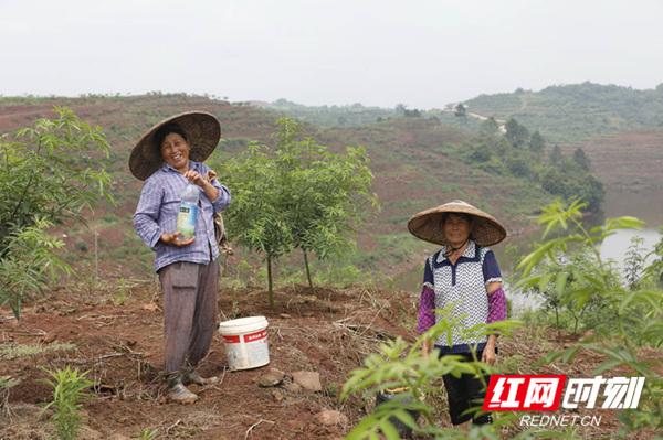 【紅網】衡南六合村:黨建領跑奔小康