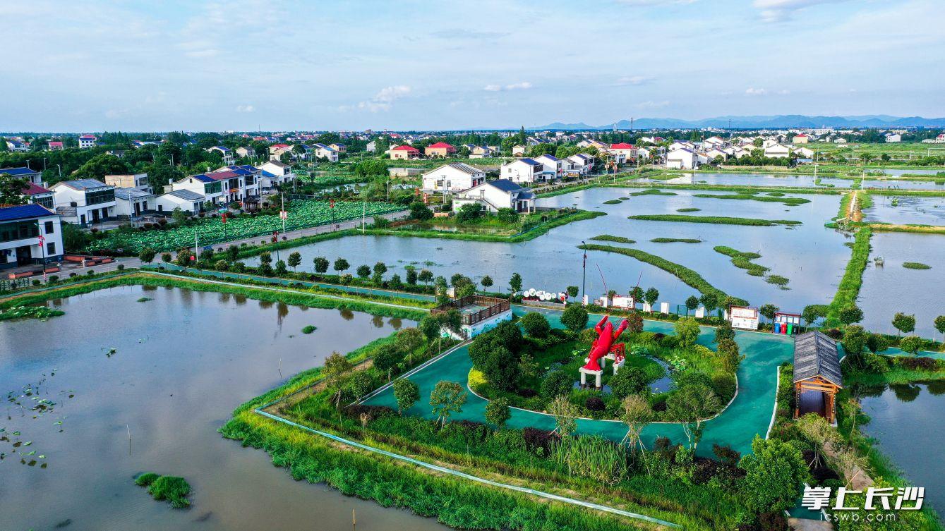 """望城乔口因了小龙虾而成功入围今年全国农业产业强镇建设名单,是长沙唯一""""上榜""""的乡镇。龙宇 摄"""