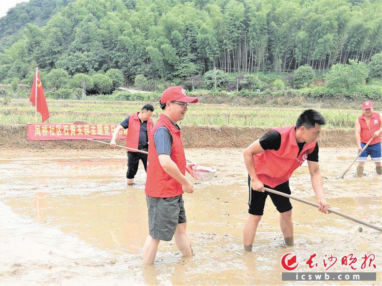 在凤桥社区贫困户的水田里,党员干部帮忙平整田地、播稻种。张禹 摄