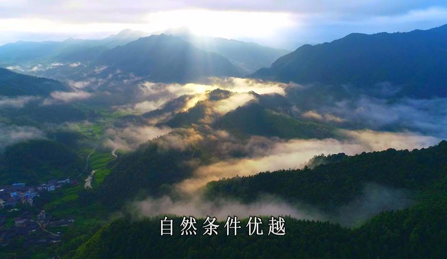 触摸年轮——湖湘古树名木寻芳