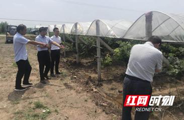 澧县农业农村局赴官垸指导葡萄园生产抗灾救灾工作
