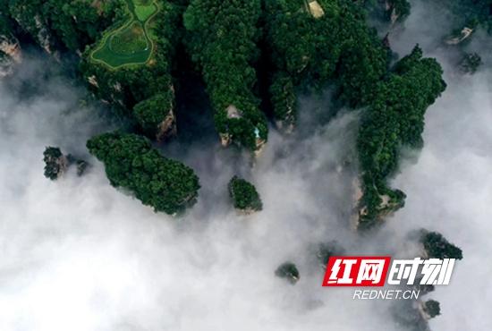 白白的云雾飘逸在连绵峰峦间,如梦似幻,场景十分壮观。.jpg