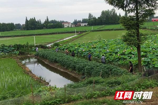 益阳南县浪拔湖镇:新老护堤人的接力