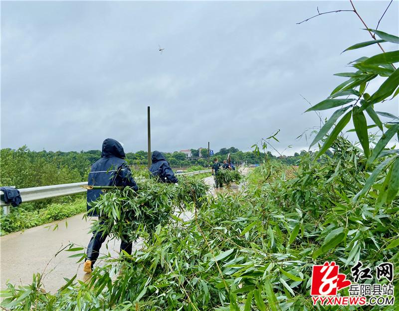 村民冒雨沿堤岸码好竹捆.jpg