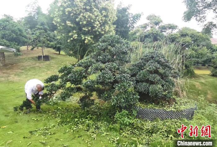 跳马镇的花卉苗木产业兴旺。 雨花区委宣传部供图 摄