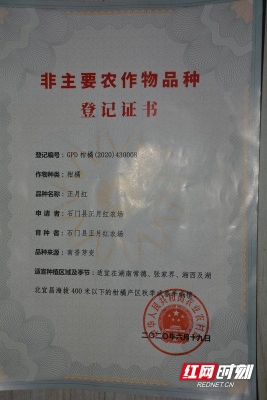 正月红柑橘登记证书.JPG