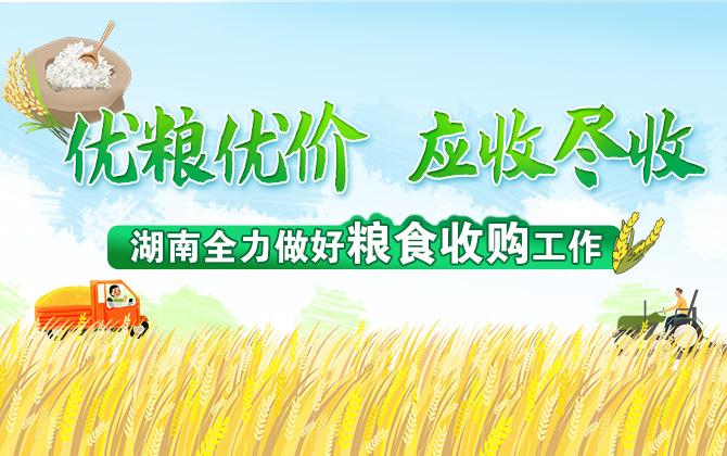 专题丨看湖南如何打好全年粮食收购第一仗