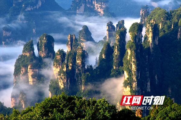最美峰林——张家界天子山西海峰林-西海峰林是位于湖南省张家界市武陵源神堂湾的一处绝景。它的主要特点是数以千计的奇峰怪石拔地而起森列谷中。_副本.jpg