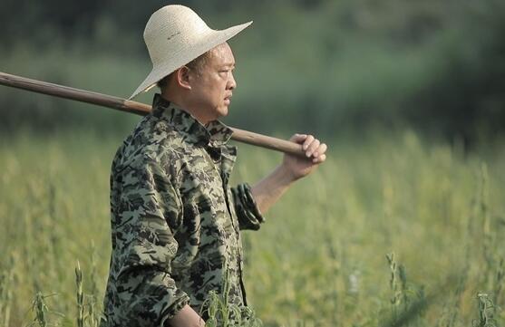 人民日报丨湖南农民父子43年接力搞科研,培育出杂交油菜新品种