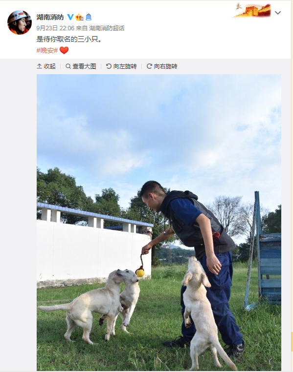 在线征名!湖南3只萌萌哒搜救幼犬等你来取名!