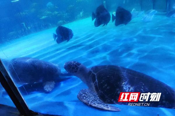 海龟123.jpg