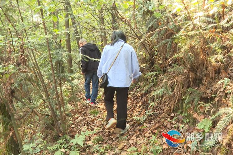 市疾控中心专家在林间寻找野生蘑菇。.png