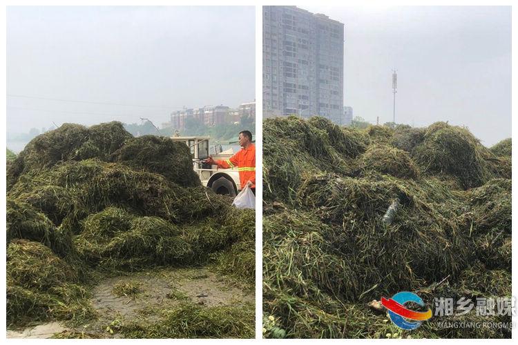 经过近5个小时的奋斗,共清理水草、杂物30余吨.jpg