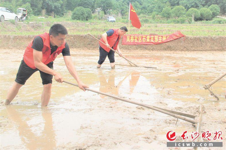 在夏铎铺镇凤桥社区贫困户周建伟的水田里,党员干部们正在帮助他平整田地、播种中稻。