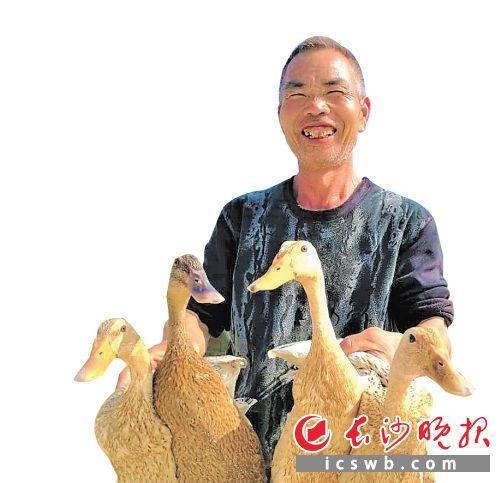 在灰汤镇双盆村,贫困户张崇六靠着饲养灰汤贡鸭脱贫致富。张禹 摄