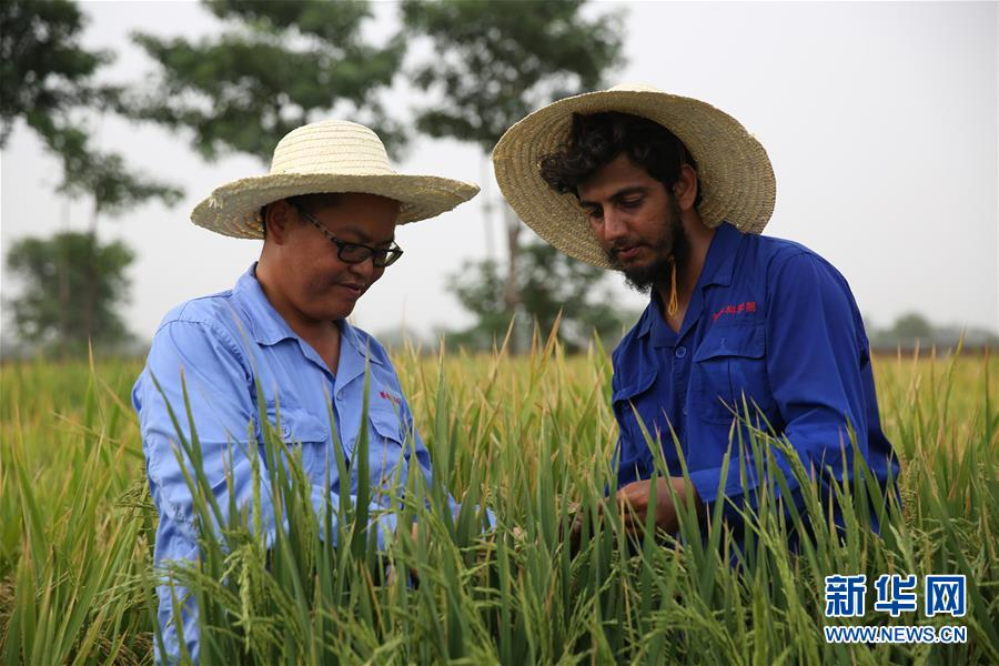 (国际)(7)世界粮食日:维护全球粮食安全 世界各国休戚与共