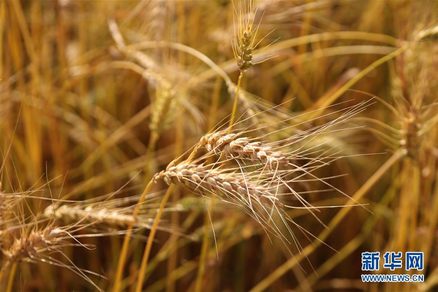 (国际)(4)世界粮食日:维护全球粮食安全 世界各国休戚与共