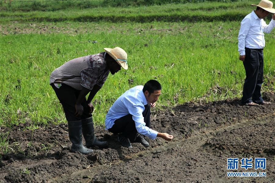 (国际)(6)世界粮食日:维护全球粮食安全 世界各国休戚与共