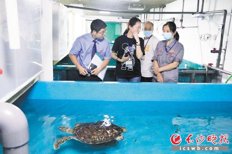 """20余只珍贵、濒危海龟被卖到长沙,在检察机关帮助下顺利""""回家""""。 长沙晚报通讯员 王俐 摄"""