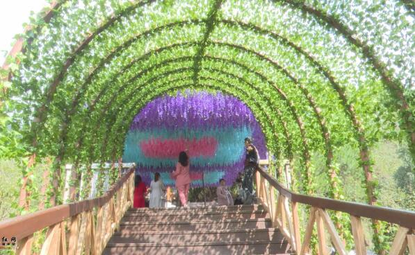 靖州最新网红打卡点:飞山紫藤花长廊