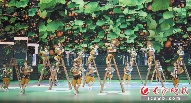 歌舞剧《大地颂歌》中,贫困村村民们采摘猕猴桃。  新华社记者 陈振海 摄