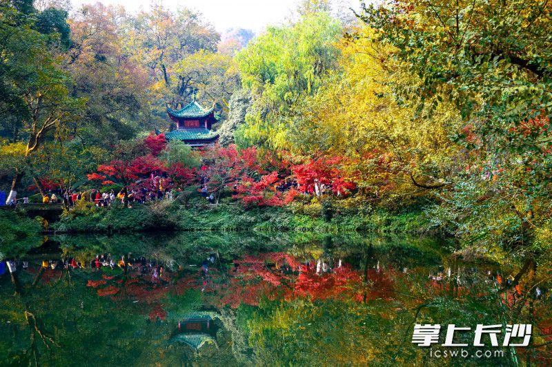 红枫衬托下,爱晚亭与水中的倒影相映成趣,煞是美丽。