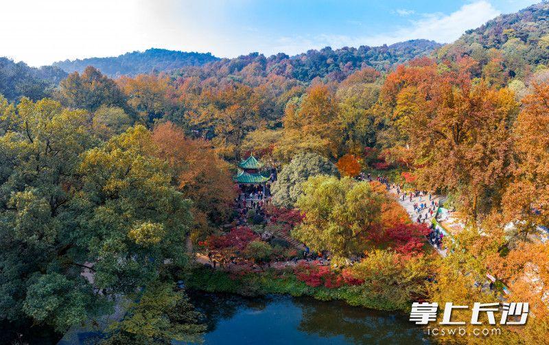 岳麓山上枫叶已经红了,冬日暖阳下,前来爱晚亭游玩打卡的市民络绎不绝。均为长沙晚报全媒体记者 陈飞 摄
