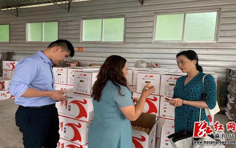 芙蓉区总工会人员考察麻阳蓝凤凰公司鸡蛋生产情况.jpg
