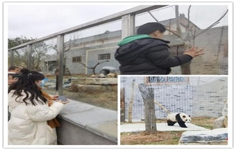 凤凰:呆萌大熊猫引游客享假期亲子时光