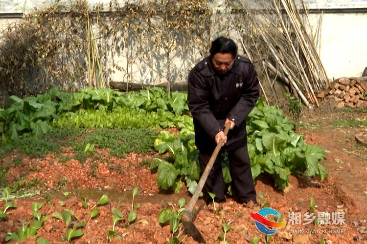 胡建光打理自家的小菜园。.png