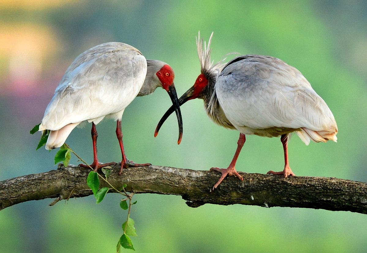 Protection efforts bring wildlife back from brink