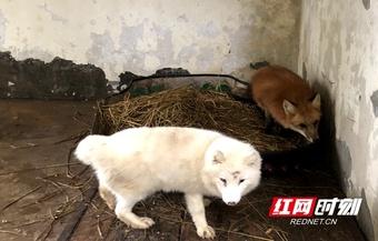 湘潭丨天寒地冻 动物园的小动物怎么过冬?