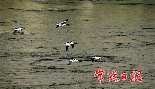 仙阳湖国家湿地公园2.jpg