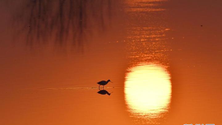 洞庭湖鸟翩跹