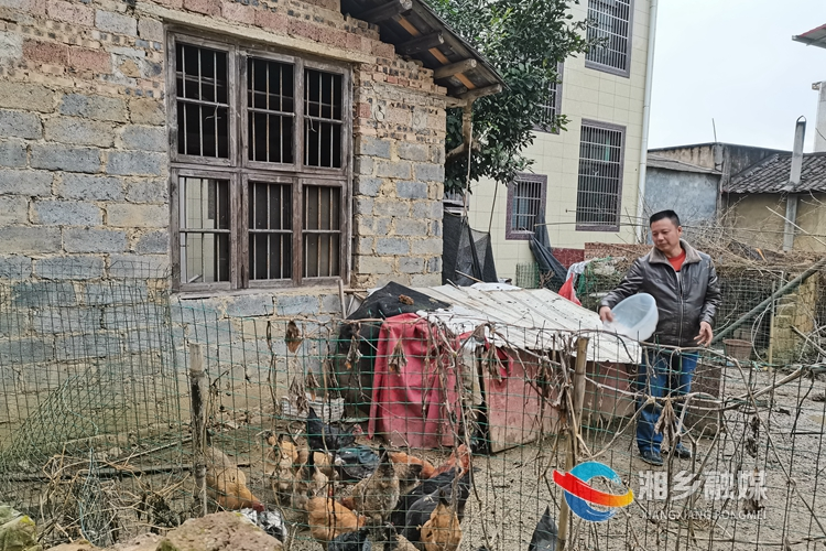 李雪锋发展养鸡产业。.jpg