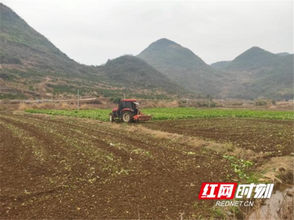 回龙圩:正月生产忙  复工复产助农增收(1)(1)(1)532_副本_副本.png