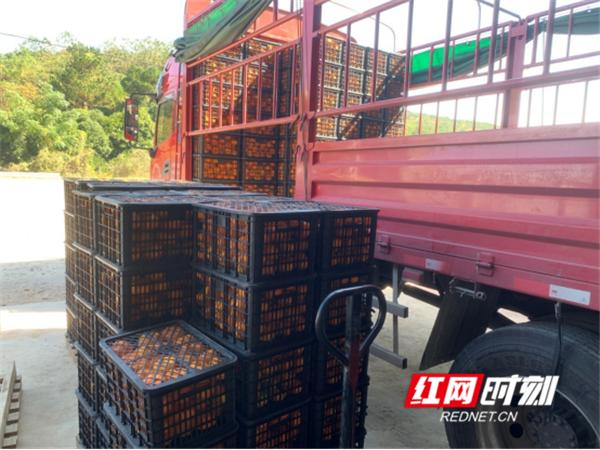 回龙圩:正月生产忙  复工复产助农增收(1)(1)(1)975_副本_副本.png