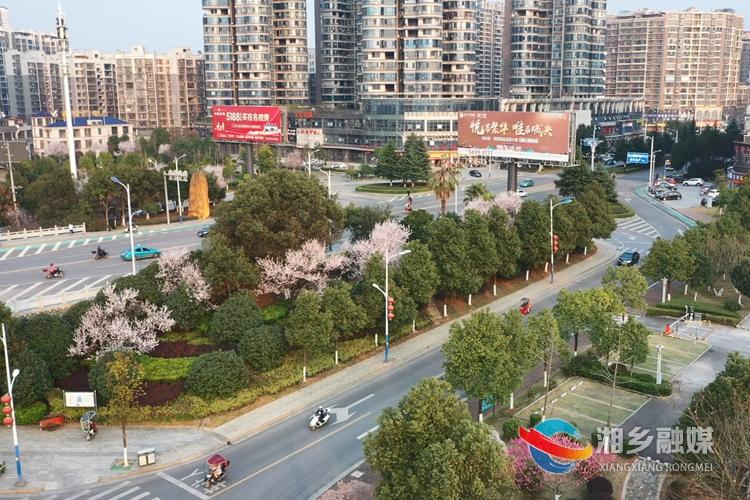 镇湘桥头,春风吹开满树繁花。.jpg