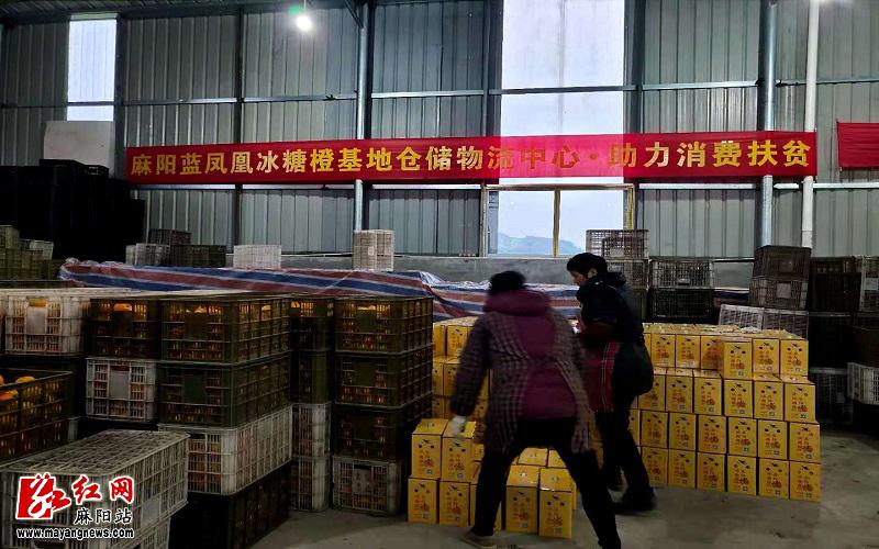 麻阳蓝凤凰公司对芙蓉区消费扶贫集中采购的冰糖橙分包装.jpg