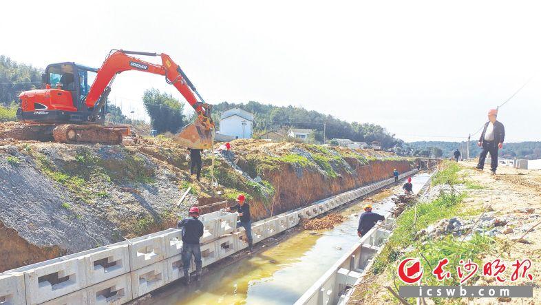 路口镇明月村高标准农田建设项目现场。  杨源 摄