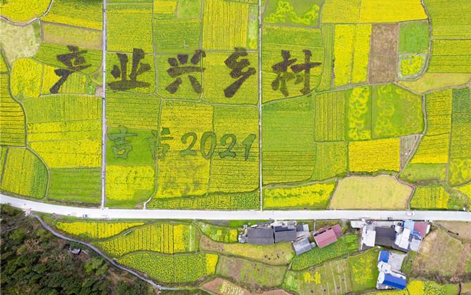湖南湘西:村民油菜田里绘乡村蓝图