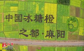 """麻阳:油菜花景观  写在大地上的""""名片"""""""